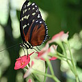 Butterfly Perch by Donna Gibson