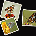 Butterfly Picture Page Collage by Kathy Clark