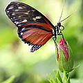 Butterfly Resting by Mark Heywood