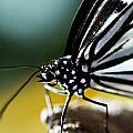 Butterfly by Rita Fuller