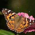 Butterfly by Stephen  Tunis