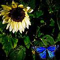 Butterfly by Steve McKinzie