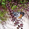 Butterfly  by Sumit Mehndiratta