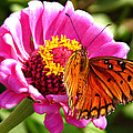 Butterfly Treat by David  Brown