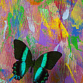 Butterfly Wall by Garry Gay