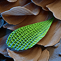 Butterfly Wing Scale Sem by Eye of Science
