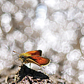 Butterfly With Bokeh Light by © Yannick Lefevre - Photography
