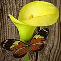 Butterfly With Calla Lily by Garry Gay