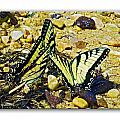 Butterlies At The Beach by Brian Wallace