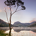 Buttermere Tree by Phil Buckle