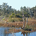 Buxton Salt Marsh - Outer Banks Nc by Mother Nature