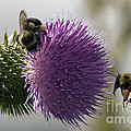 Buzz And Munch by Darleen Stry