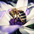 Buzz Wee Bees by Lessie Heape