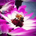 Buzz Wee Bees Ll by Lessie Heape