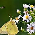 Buzzed Butterfly by Craig Leaper