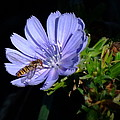 Buzzy In Blue by Alison Richardson-Douglas