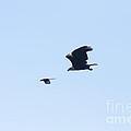 Bye Bye Magpie by Mitch Shindelbower