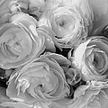 Cabbage Roses by Maureen Cunningham