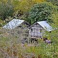 Cabins by Carol  Bradley