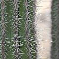 Cabo Cacti Before by Paula OReilly