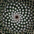 Cacti by Ben Upham III