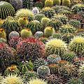 Cacti by Bjorn Svensson