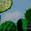 Cacti Junkie by Kim Henderson