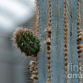 Cactus 17 by Cassie Marie Photography