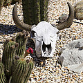 Cactus And Cow Skull by Jim And Emily Bush