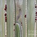 Cactus Buds by Rebecca Margraf