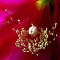 Cactus Flower Interior by Nancy Griswold
