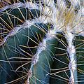 Cactus I by Linda Dunn