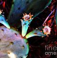 Cactus by Judi Bagwell
