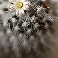 Cactus by Maria Mosolova