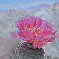 Cactus by Muriel Dolemieux