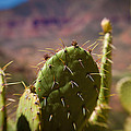 Cactus With A View by Paul Roach
