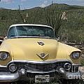 Caddy In The Desert by Diane Greco-Lesser