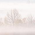 Cades Cove Fog by Bill Swindaman