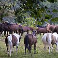 Cades Cove Horses by Mike Aldridge