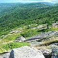Cadillac Mountain Rocky View by Lizi Beard-Ward