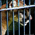 Caged Beauty by Shawna Gibson