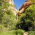 Calf Creek Falls Canyon by Adam Jewell