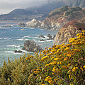California Coast by Diane Bohna