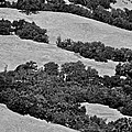 California Hillside Oaks by Eric Tressler