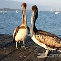California Pelicans by Henrik Lehnerer