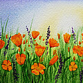 California Poppies Field by Irina Sztukowski