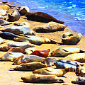 California Sunbathers . Harbor Seals by Wingsdomain Art and Photography