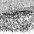 California: Vineyard, 1889 by Granger