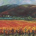 Calistoga Vineyard In Napa Valley By Deirdre Shibano by Deirdre Shibano