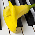 Calla Lily On Keyboard by Garry Gay